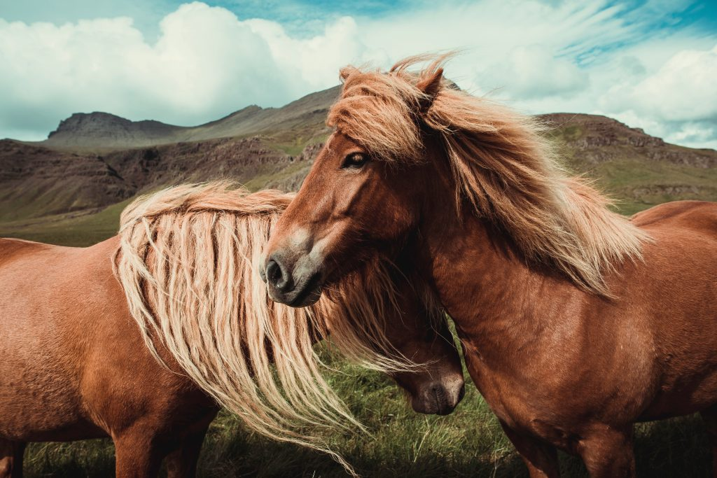 poney câlins