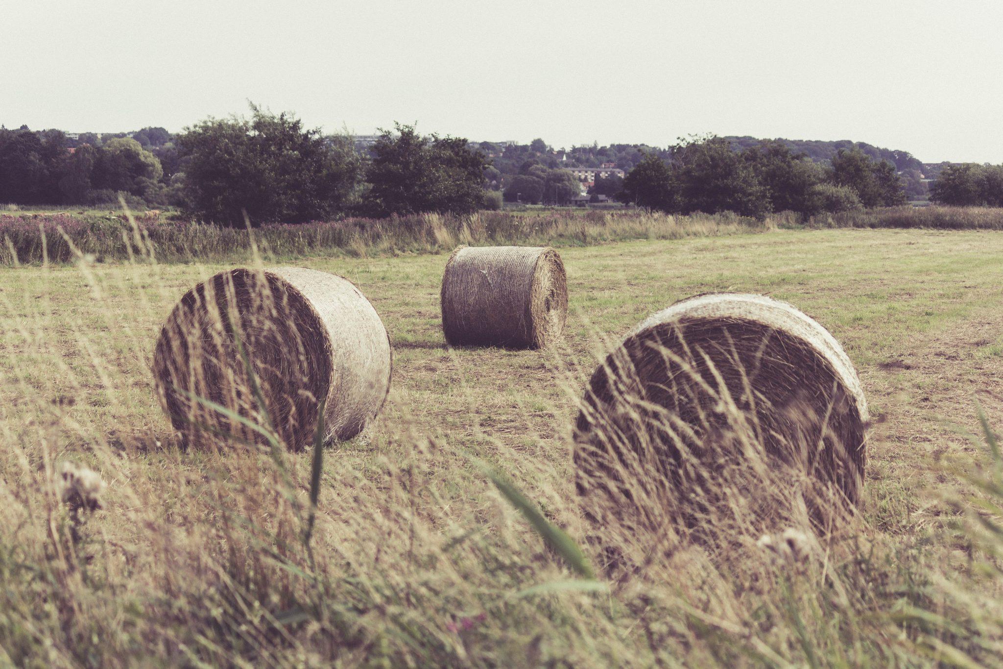 champs de paille