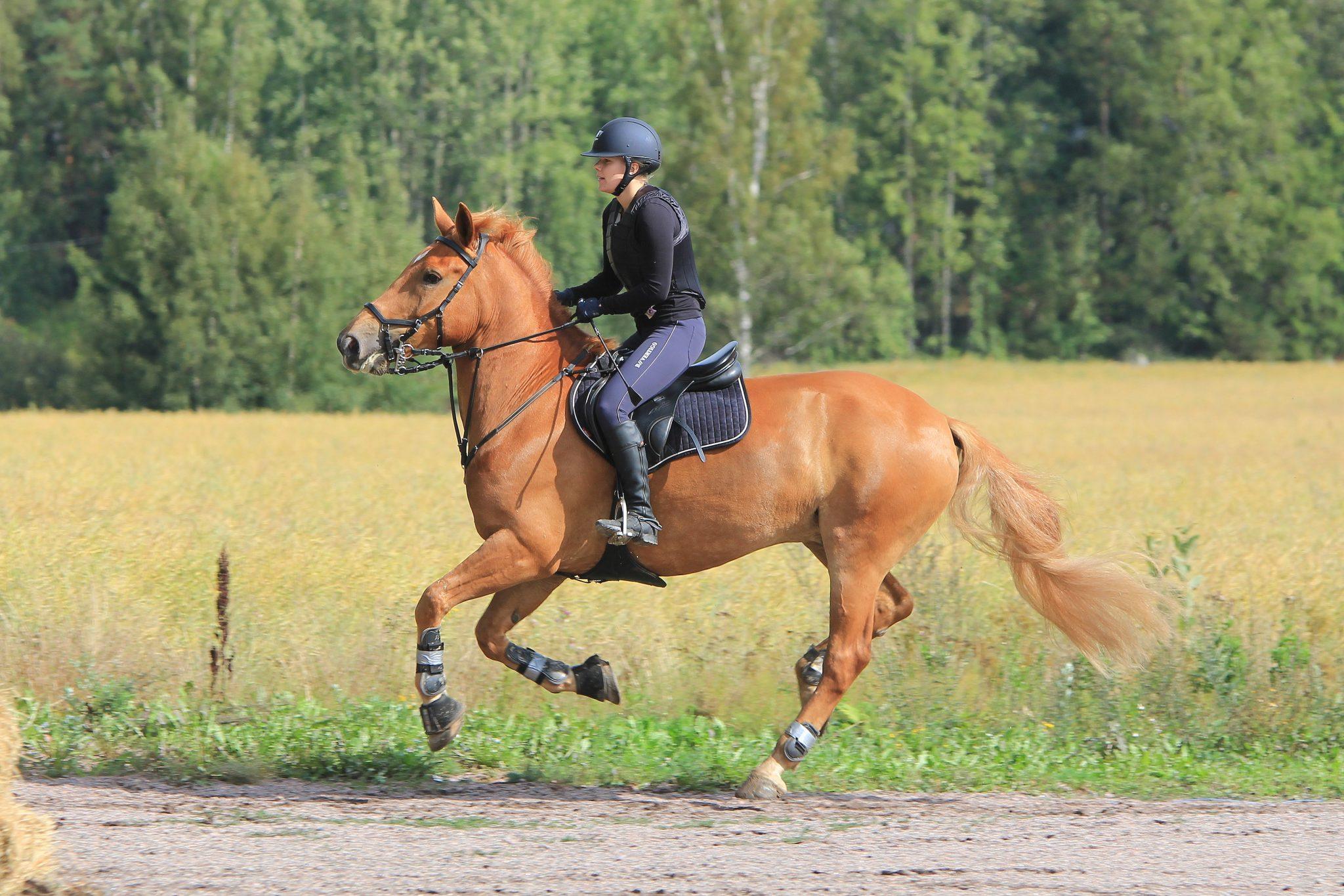 photo cheval alezan et cavalier profil