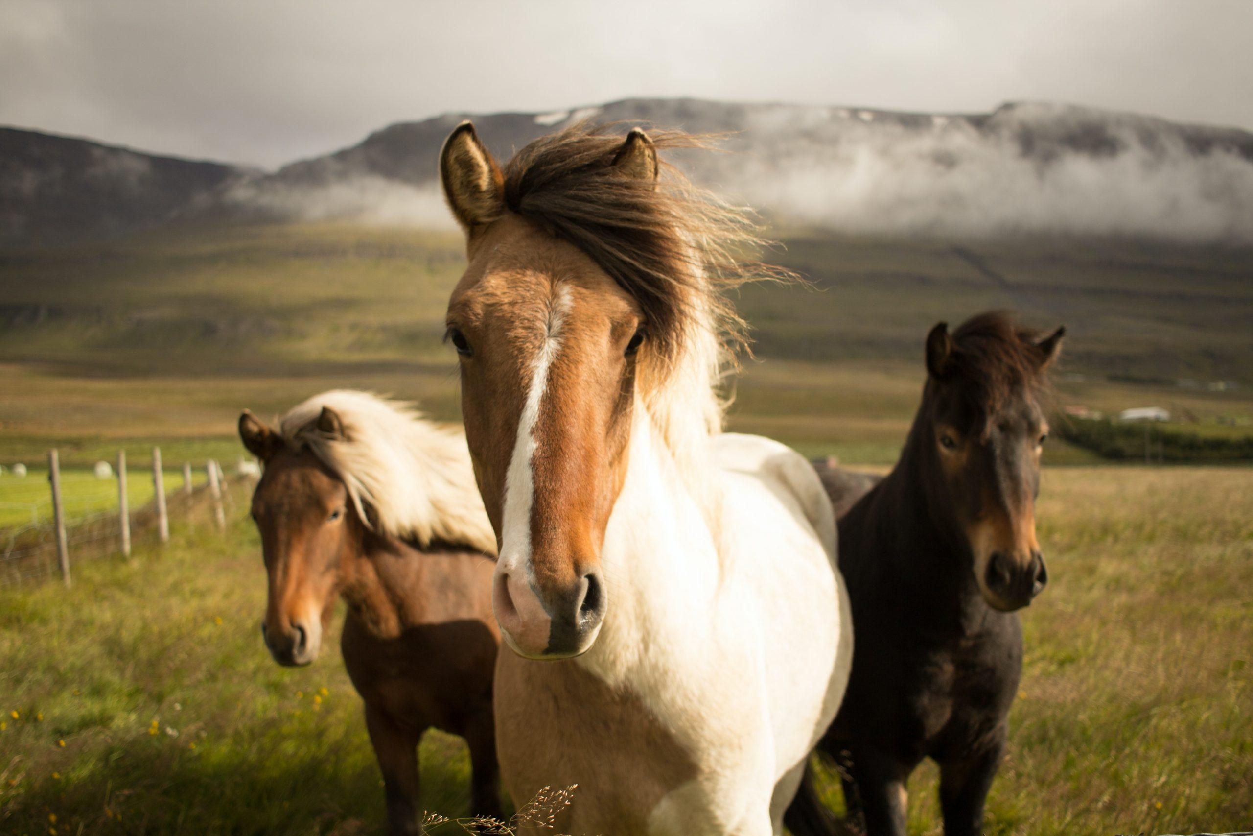 photo poneys portrait champs