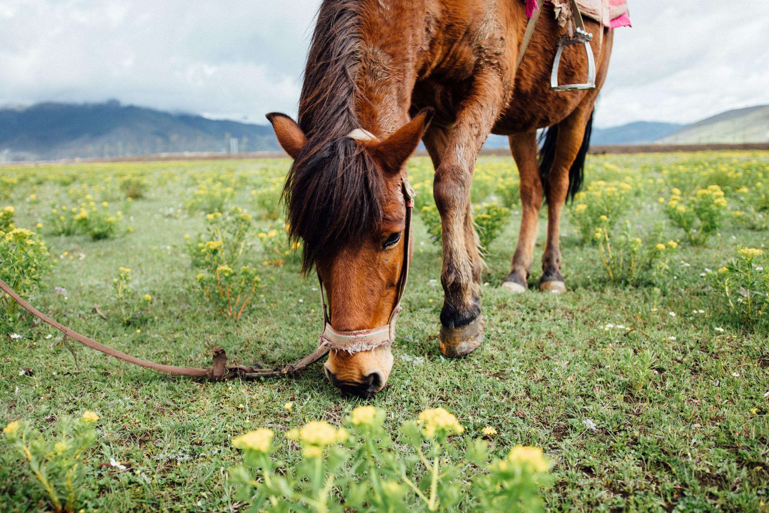 photo cheval mange champs