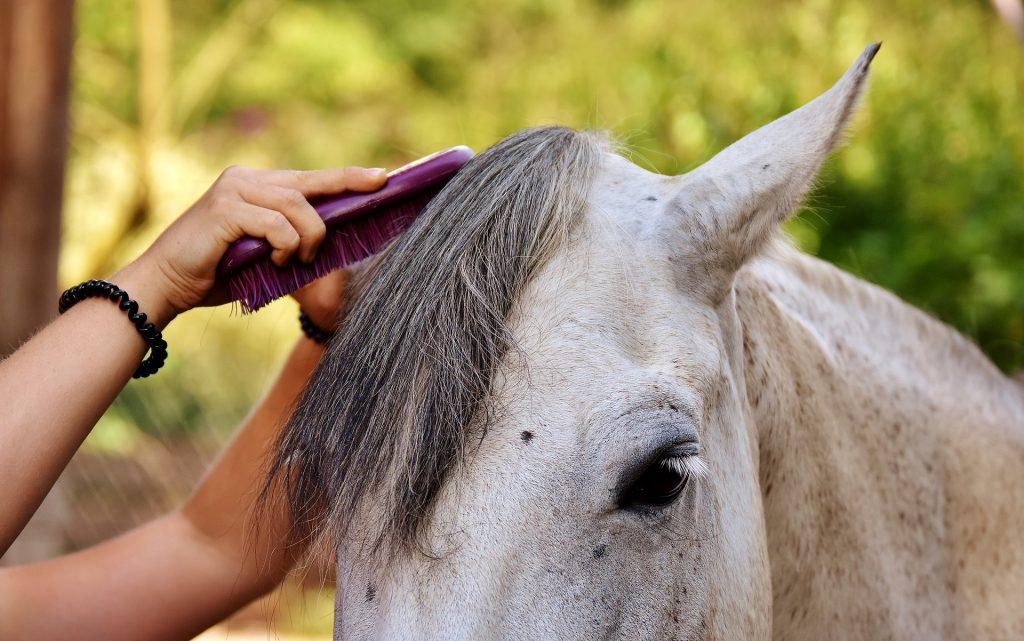 pansage toupet cheval