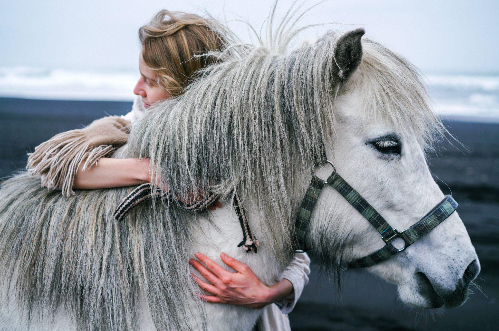 câlin avec cavalier et poney blanc