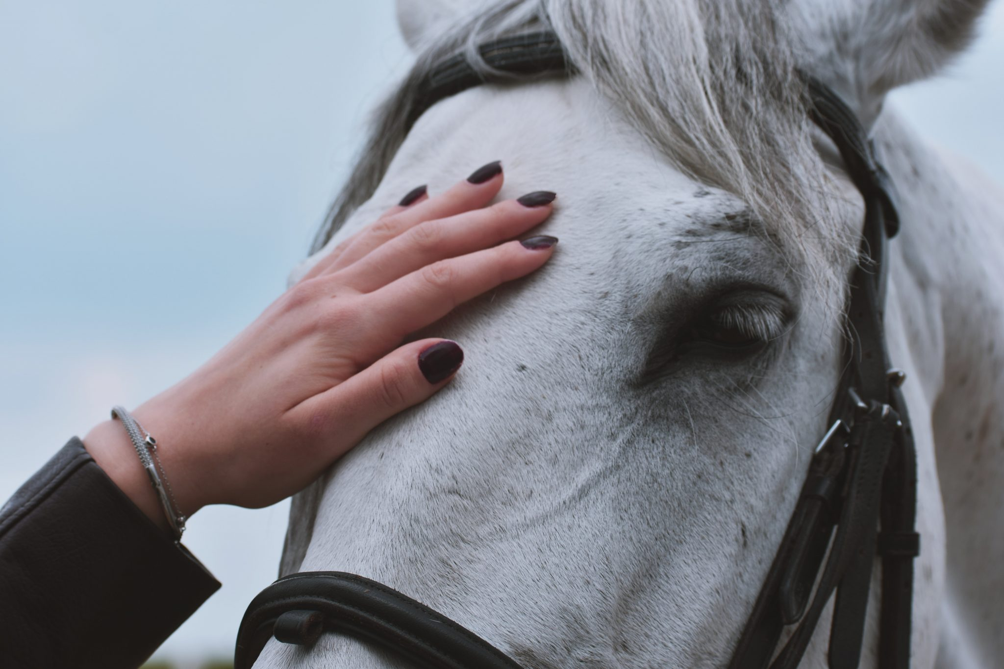 caresse cheval blanc