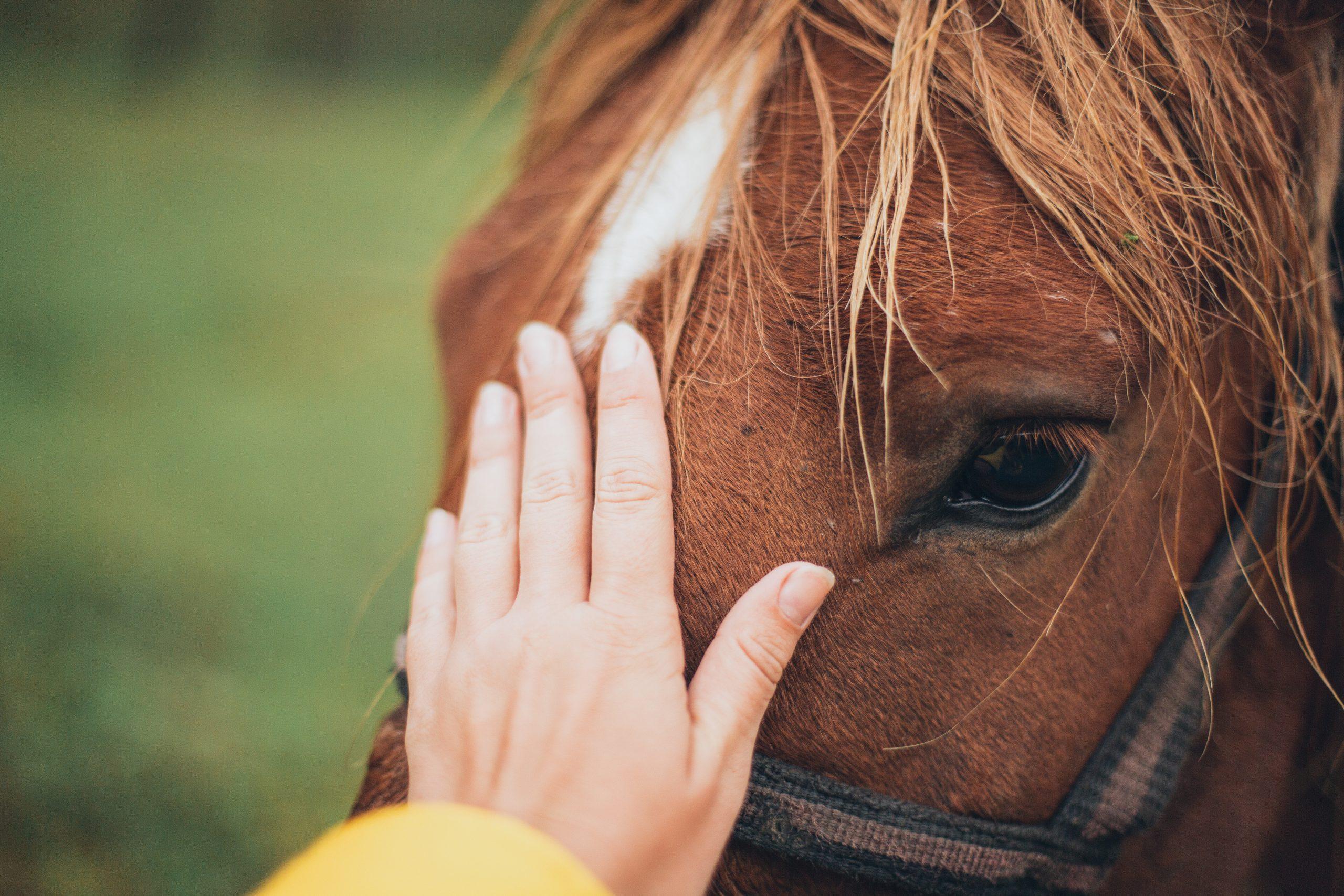 photo caresse front poney