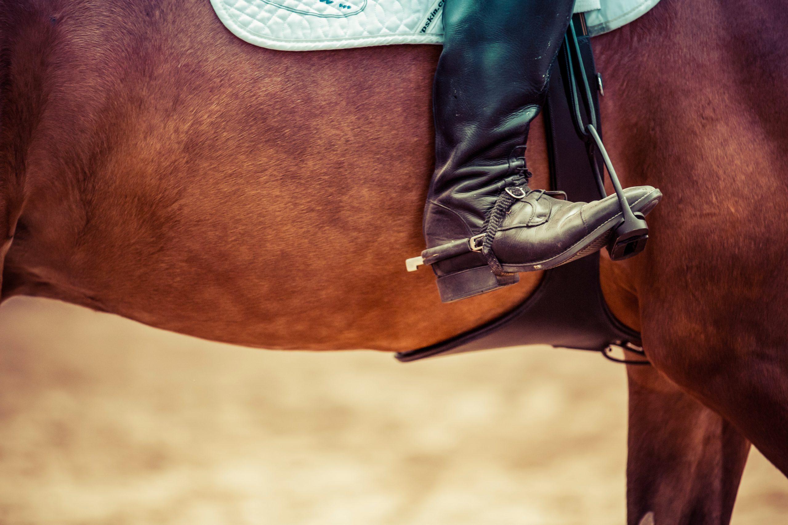 photo bassin cheval éperon