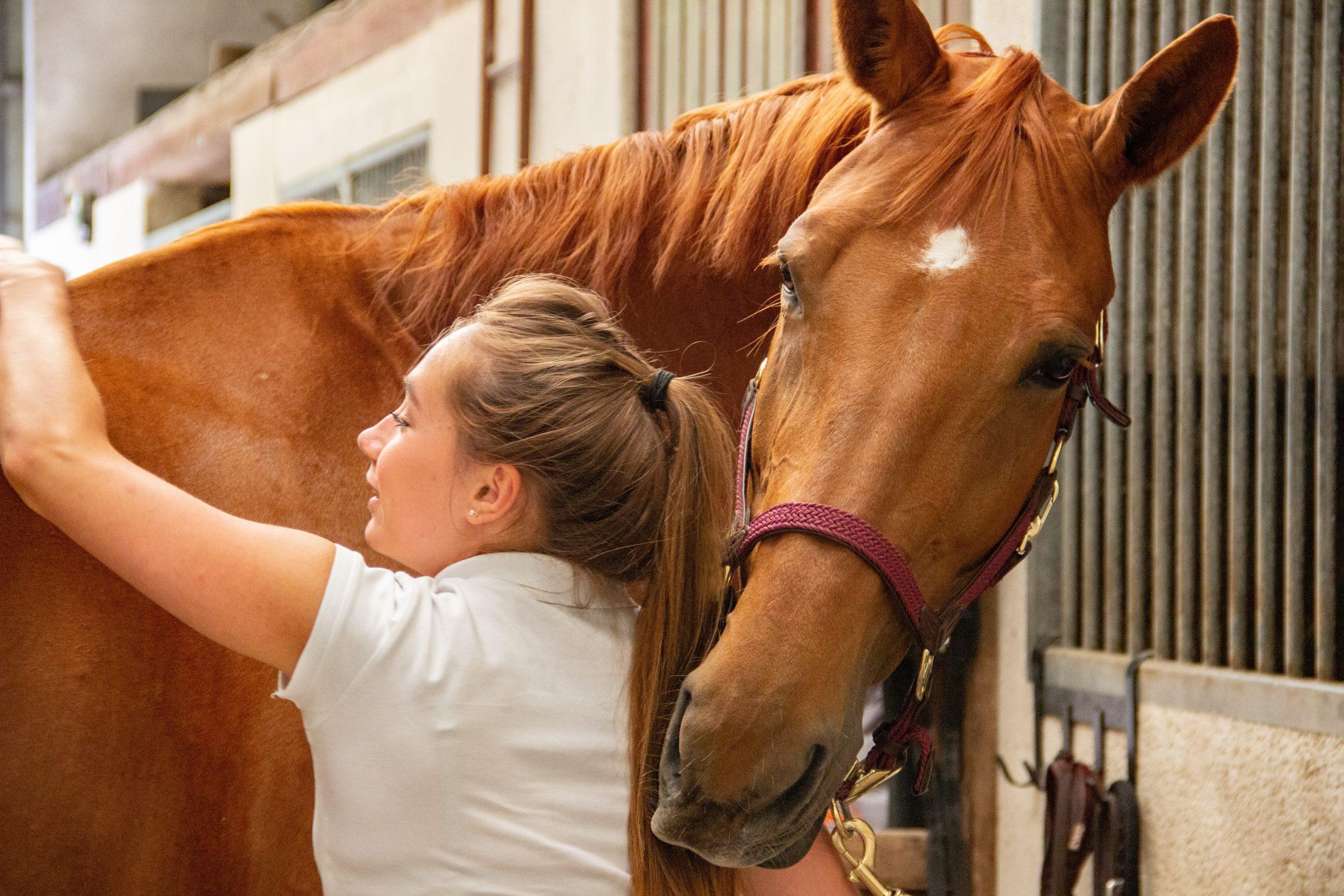 photo cheval cavalier pansage écurie